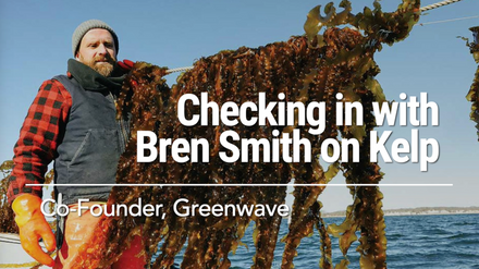 Checking in with Bren Smith on Kelp