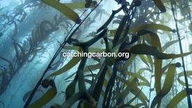 Catching Carbon Kelp