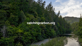 Catching Carbon Trees