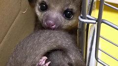 Funny funny videos cute cute animals love animals animal videos comedy