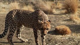 Animal Ark educational videos