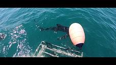 Shark Dive Montauk