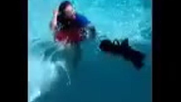 A Havanese swimming