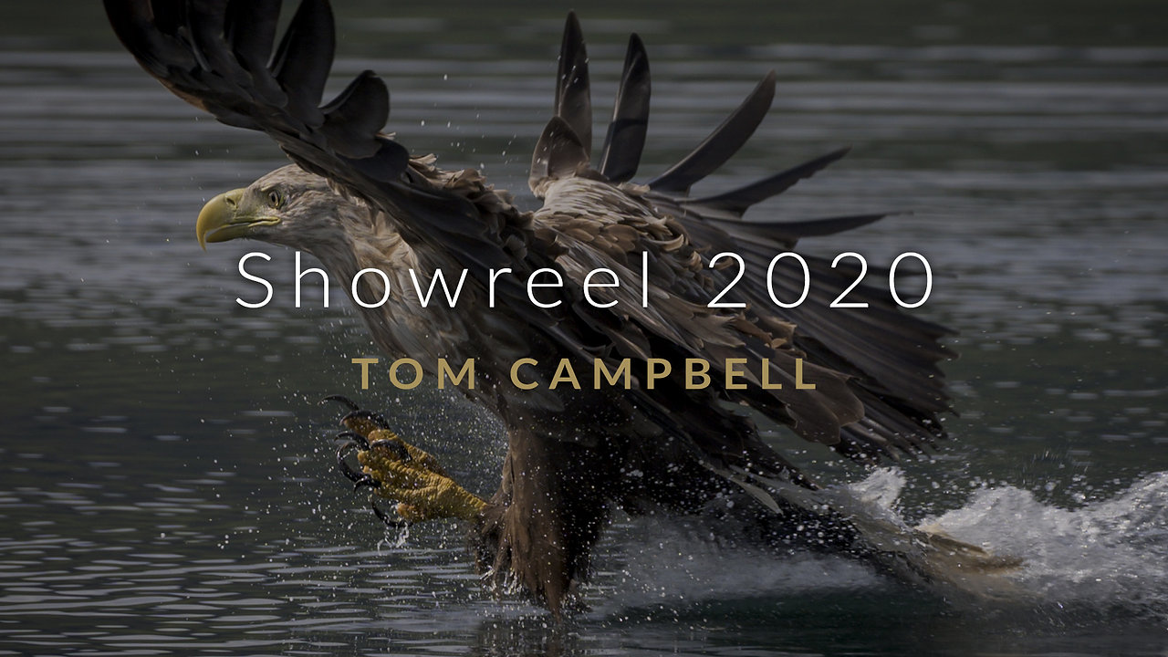 Natural History Showreel 2020 - Tom Campbell