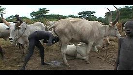 pronto La Ruta del Nilo vaca