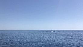 Sarbana avec les baleines à Pietracorbara