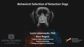 Part 1 with Dr. Lucia Lazarowski (Selection of Detection Dogs)