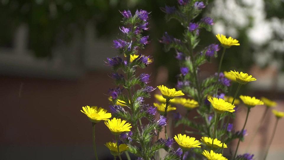 BienenPflanzen