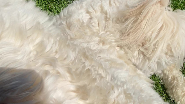 """Daisy having FUN with """"Roll Over"""""""