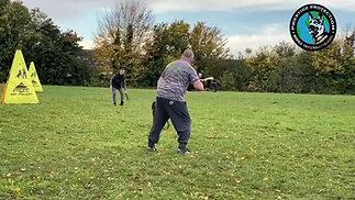 Dobermann Long Distance Attack Training