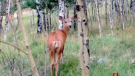June 17: Watching a Cat Watch a Deer with Wonder