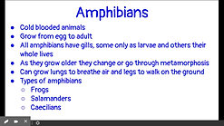 Animal Classifications 3-5 Tuesday