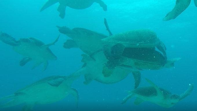 Isla Mujeres MX Turtle Impressions