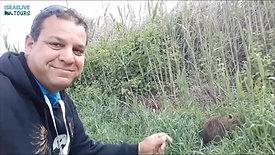 מפגשים קרובים עם בעלי חיים בטיולים בישראל