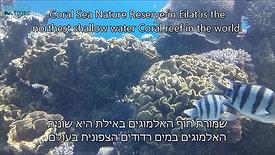 שמורת טבע חוף האלמוגים - שחייה בלב השונית