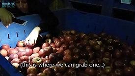 סיור וטעימות בבית אריזה לתפוחים