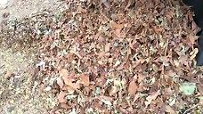 Leaf Shredder Video
