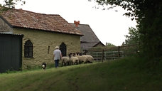 Susie and sheep the firs time (3 of 3)