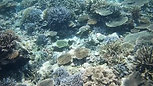 Vacances a la mer Ishigaki - Snorkeling