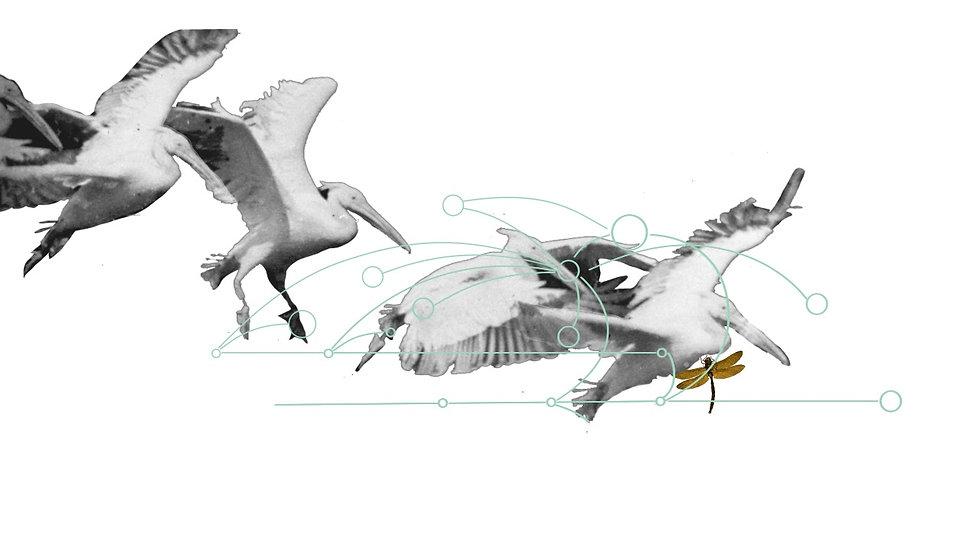 Timeline Birds02WHITE
