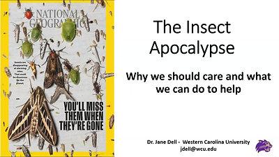 2021 Envirothon - Insect Apocalypse