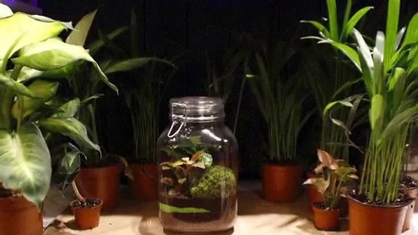 Collection éco-terrariums UG