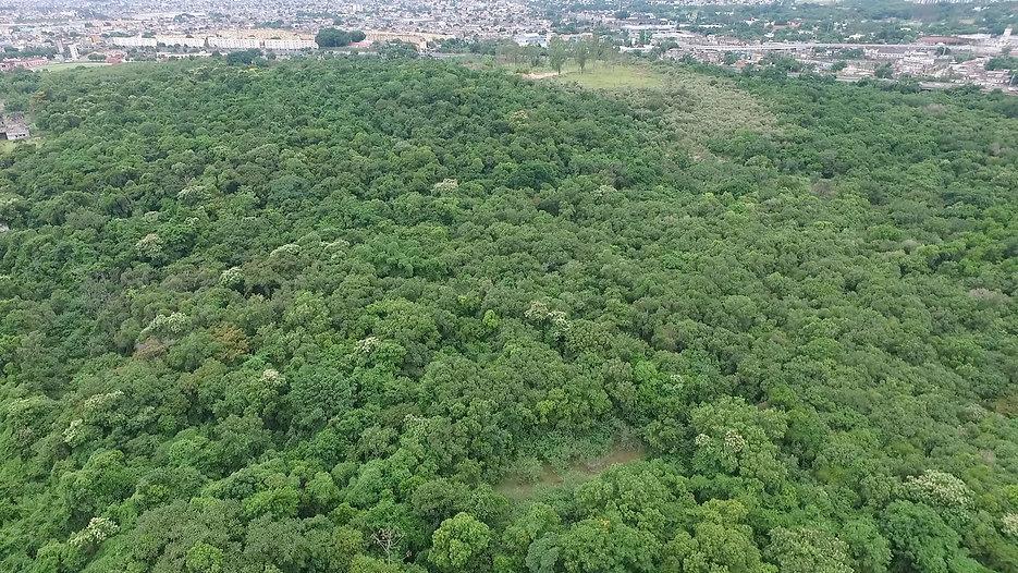SOS Floresta do Camboatá