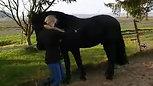 Paard aanleren travers