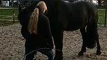 Paard leren schommelen