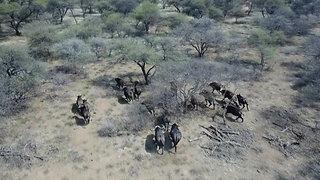 Buffalo extreme