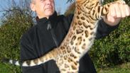 30 millions d'amis. Février 2011: Tournage réalisé par FRANCE 3 pour l'émission 30Millions d'amis, portrait du chat BENGAL. Retrouvez l'extrait de l'emission où les Bengals de la chatterie des SAPHIRS DE LUNE et de notre chatterie DIVINE IDYLLE, sont