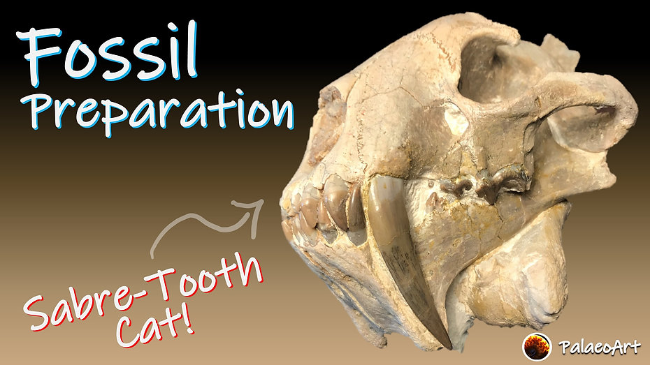 Fossil Preparation