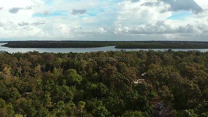 Mangrove Forest Beneath a Bright Sky