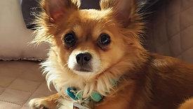 Adorable, Healthy Bailey