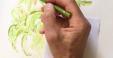 A green houseplant