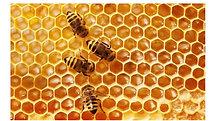 17 Bible Animal - Bee